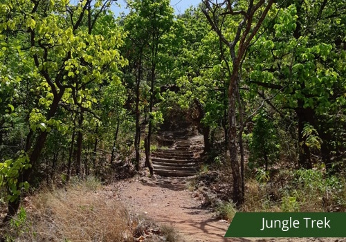 Jungle trek goflview pachmarhi