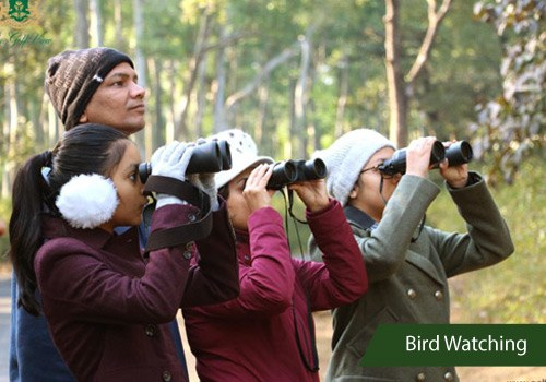 Bird Watching Golfview Pachmarhi